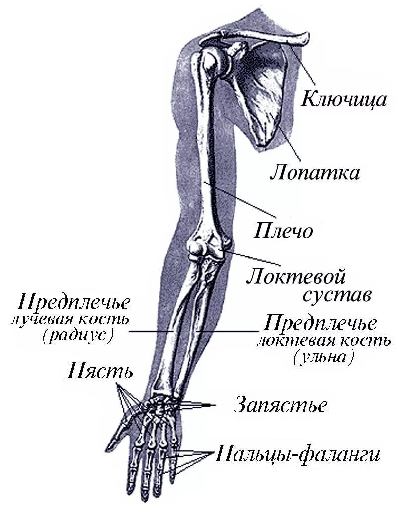 Сколько заживает перелом руки
