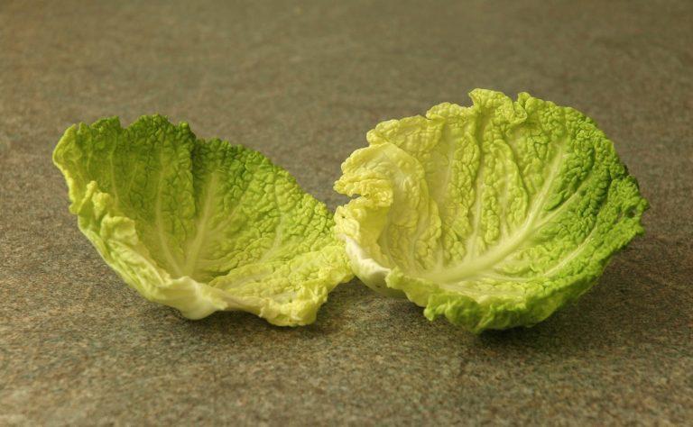 лечение листьями капусты