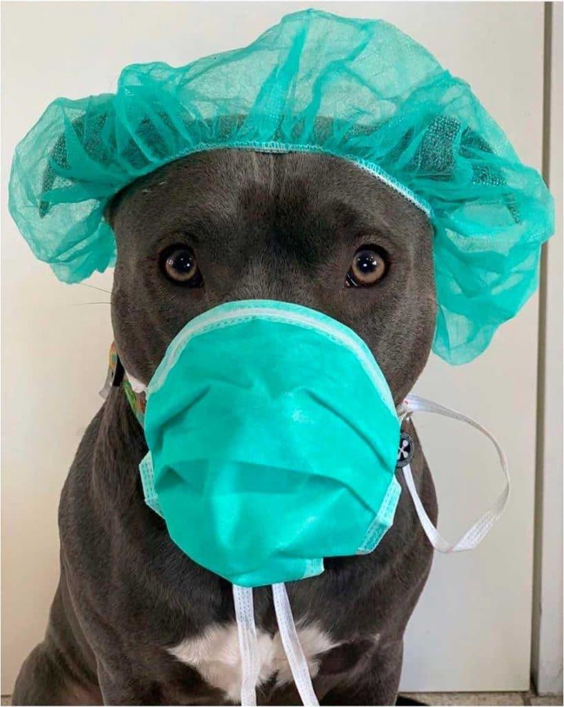 Домашние животные – главные распространители инфекции
